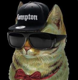Cat with hat and sunglasses