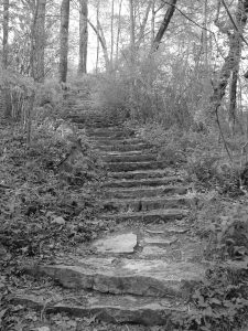 Rock stair path in the woods in greyscale